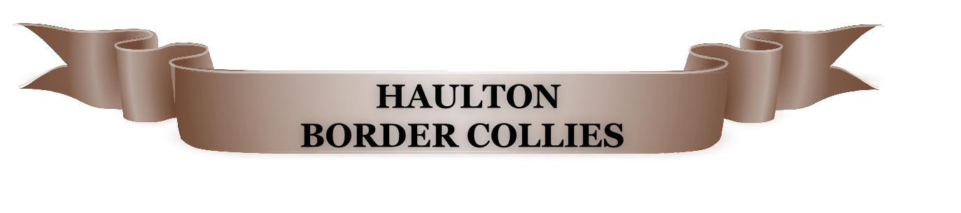 HAULTON  BORDER COLLIES